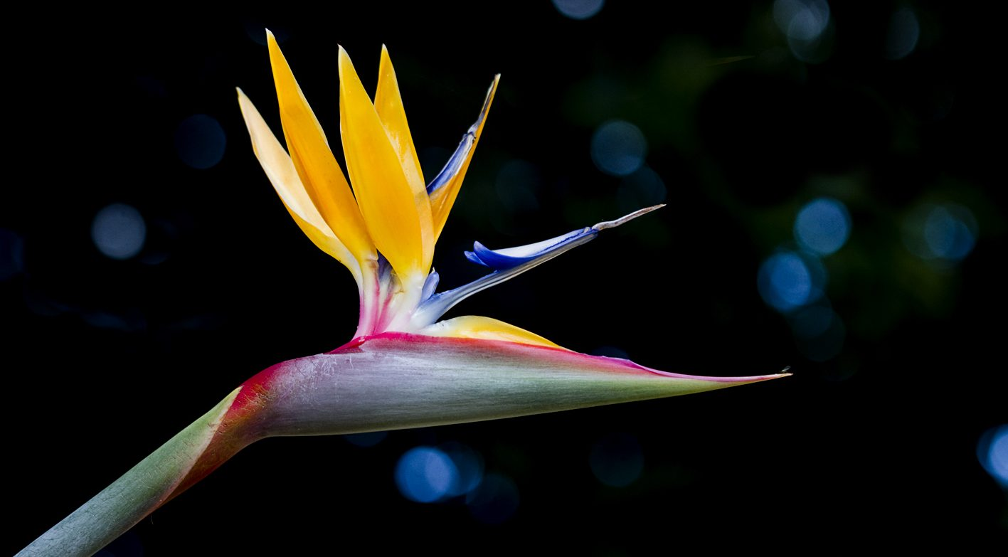 Blooms of Paradise